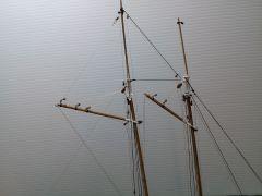 Phantom 1868 NY Pilot Boat 56. Phantom Complete 1