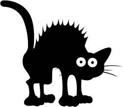 scaredy-cat.jpg