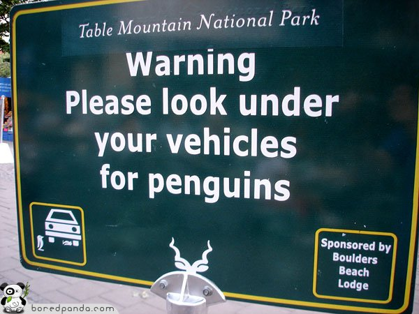 Funny-Signs-Penguins-50.jpg