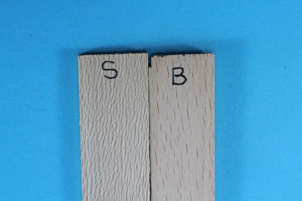 88236116_Beech-Sycamorestrips-smallfile.jpg.099895d00aefd11fda7c1f9d642b8db4.jpg