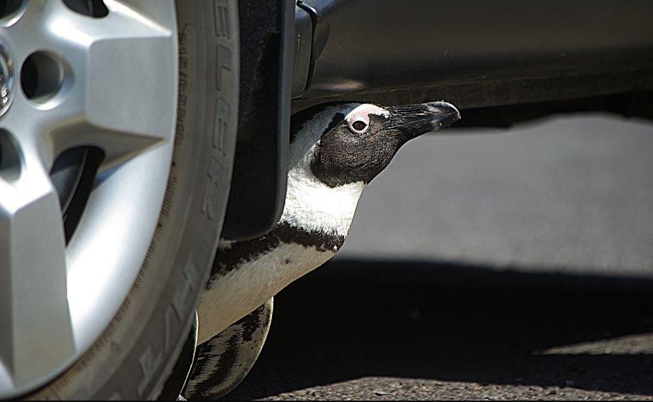 Penguin.JPG.bbe943d9039ea178b36239e6133ca2b2.JPG