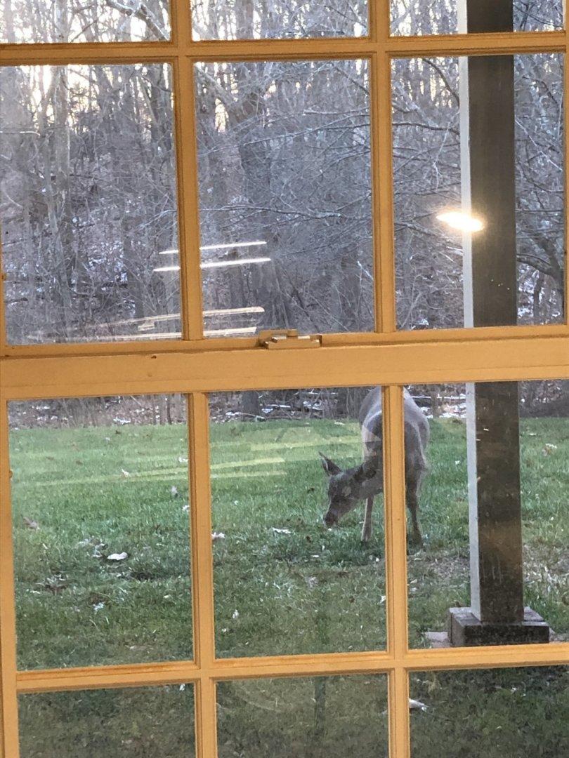 deer in window 2.jpg