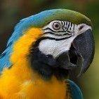 Freezing Parrot